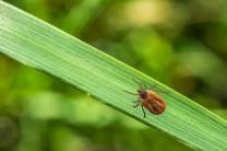Lyme : une clarification dans le grand bazar des tests diagnostiques