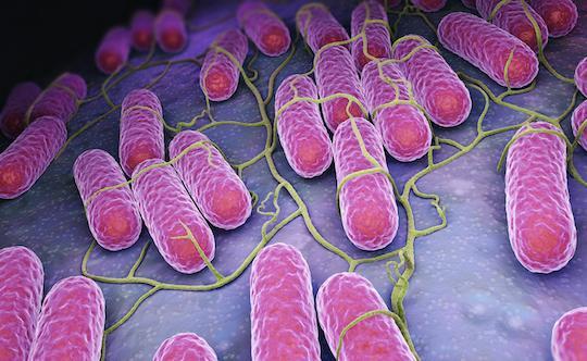 Microbiote intestinal : associée à l'hôte, c'est un super-organisme essentiel