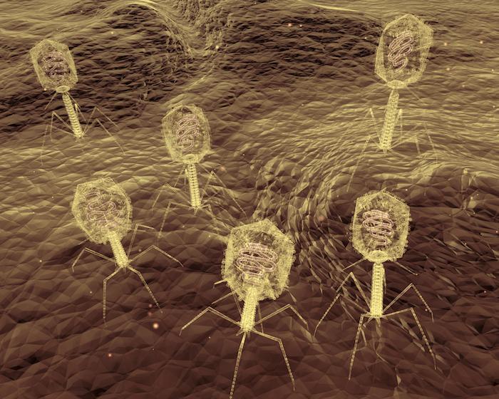 Phagothérapie : une alternative démontrée aux antibiotiques