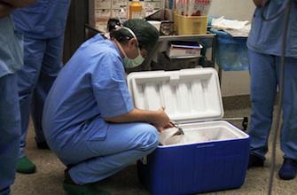 Transplantation : le don du vivant sauve des vies