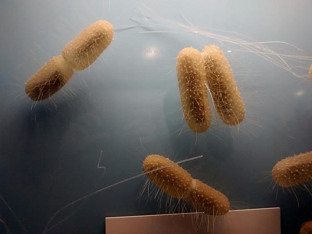 Antibiotique : une nouvelle molécule efficace sur les résistances