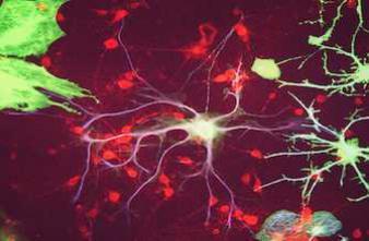 Le cerveau transforme les odeurs en souvenirs à long terme