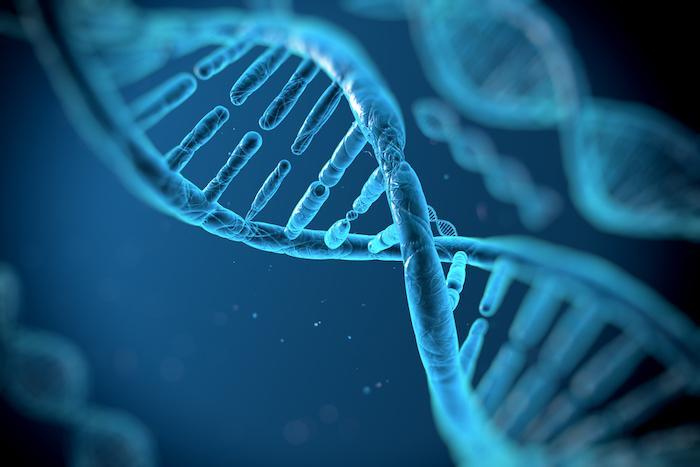 Risque : le diabète et les maladies cardiovasculaires partagent des gènes