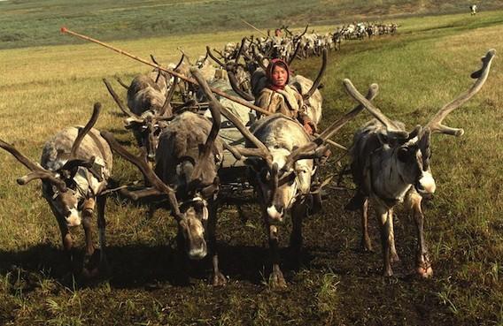 Anthrax : épidémie en Sibérie