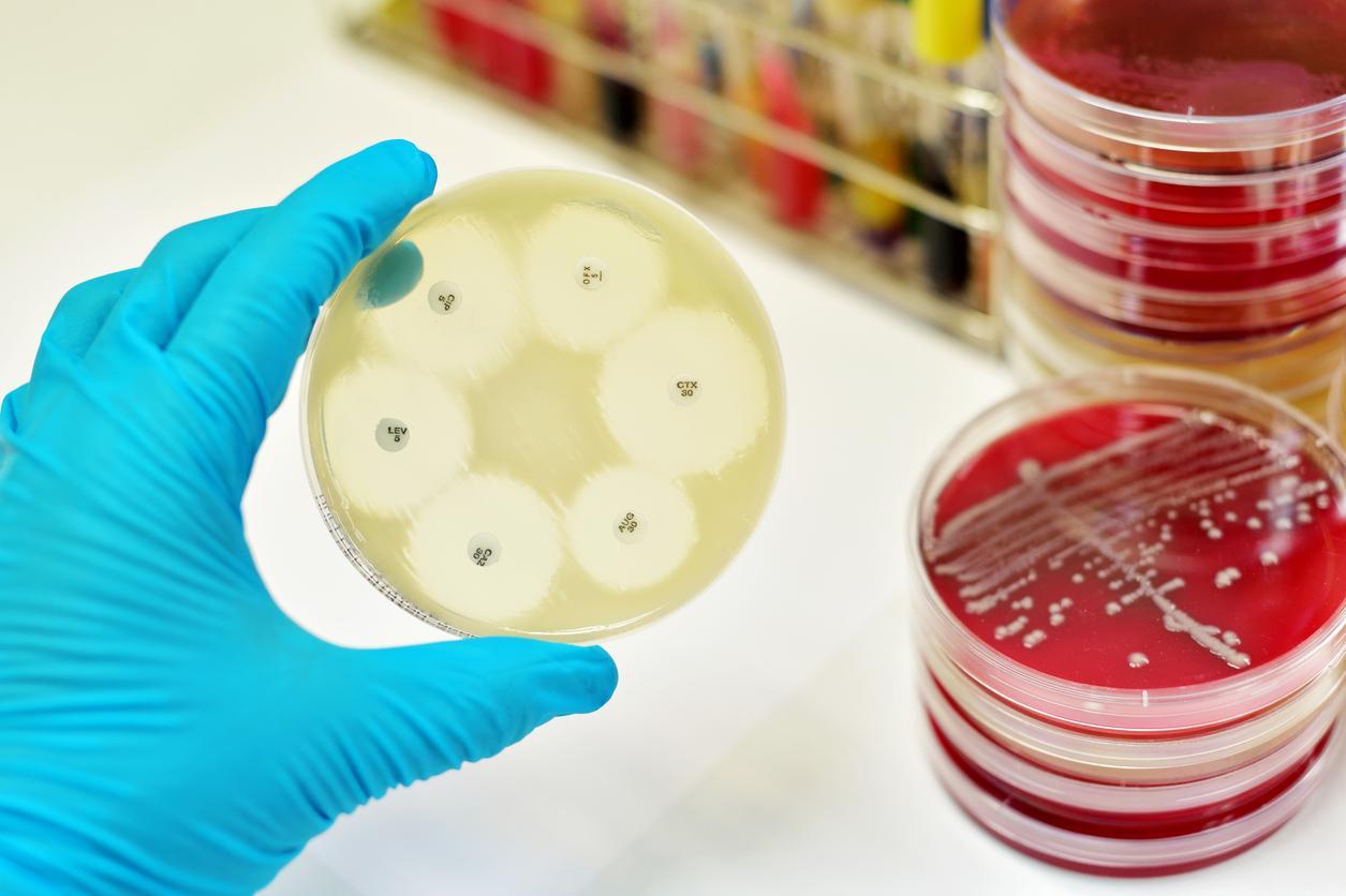 Antibiorésistance : la teixobactine, un super antibiotique