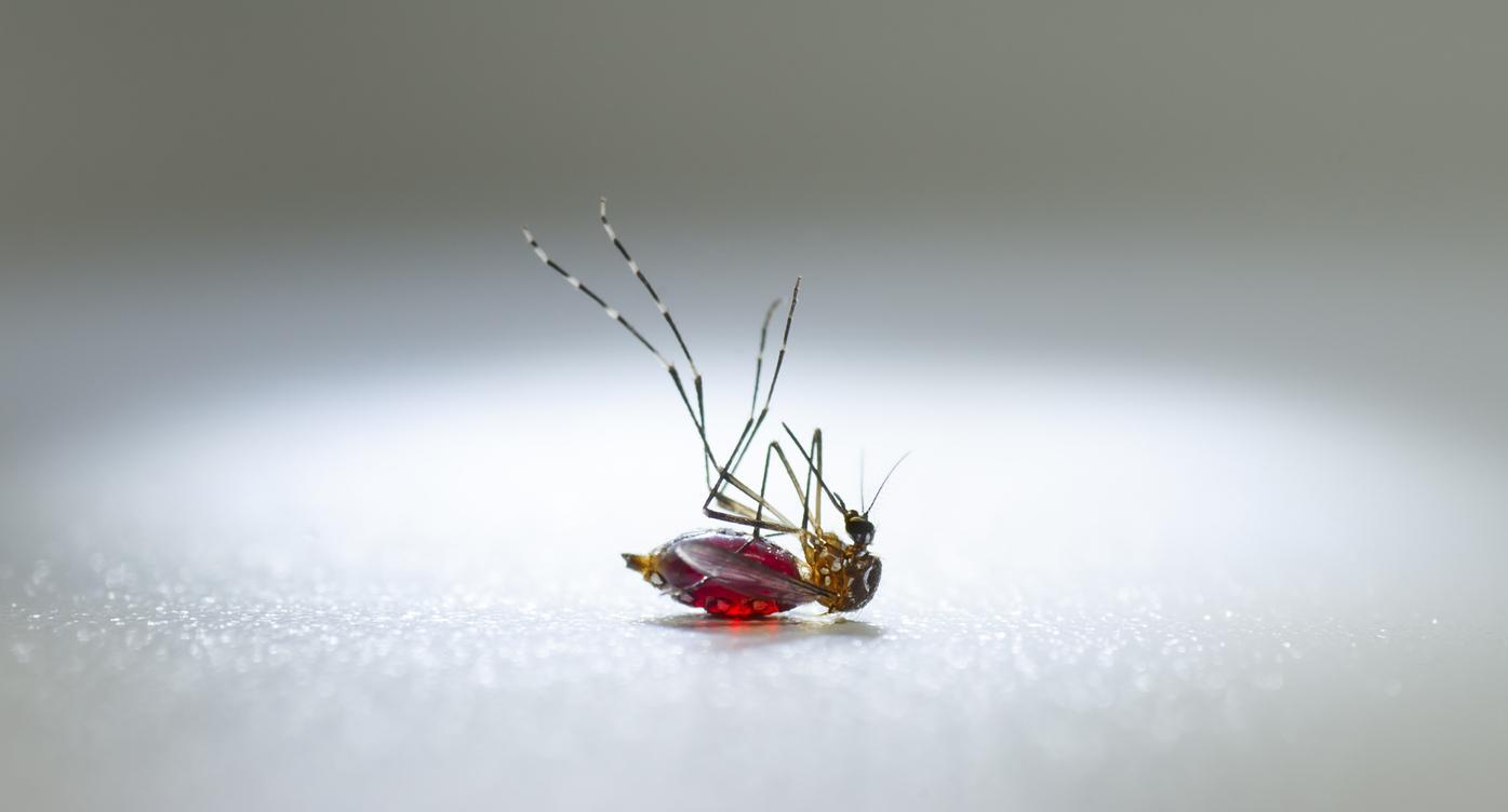 Paludisme : l'ivermectine peut tuer les parasites dans le sang