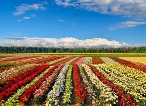 Pesticides : ils augmentent la pression artérielle chez les enfants