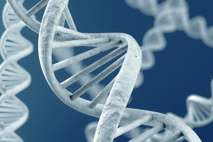 Alzheimer : un score génétique prédictif du risque et de l'âge d'apparition