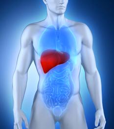 NASH : un analogue du GLP-1 confirme son intérêt contre les lésions du foie
