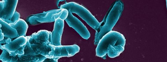 Tuberculose : Pasteur sur la piste d'un nouveau vaccin plus efficace