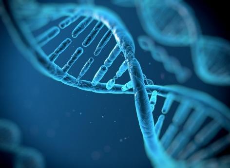 Syndrome Gilles de la Tourette : très nombreuses variations génétiques