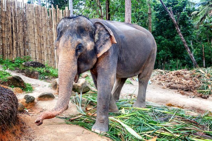 Inde : un risque élevé de tuberculose lié aux promenades à dos d'éléphant