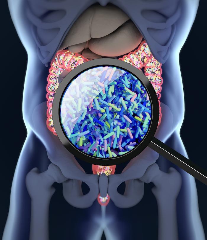 Diabète de type 2 : consommer des fibres favorise un microbiote intestinal améliorant le diabète
