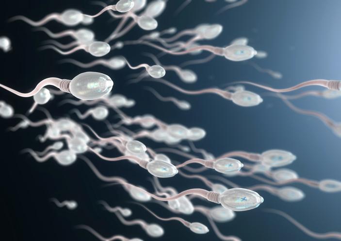 Cellules testiculaires : comment le virus Zikaaltère les spermatozoïdes
