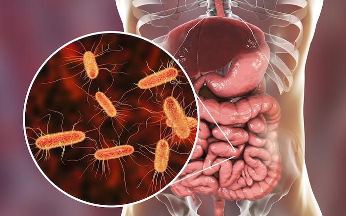 Infections parasitaires : le microbiote intestinal influence leur gravité et récurrence
