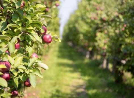 Parkinson : la maladie d'un arboriculteur reconnue comme secondaire aux pesticides