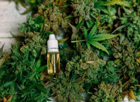 Cannabis : impact mitigé de la légalisation sur la santé