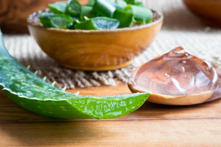 Les feuilles fraîches d'aloe vera sont laxatives et potentiellement cancérigènes