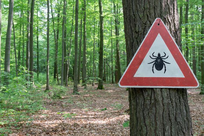 Lyme : de nouveaux tests pour la détecter plus rapidement et mieux la traiter
