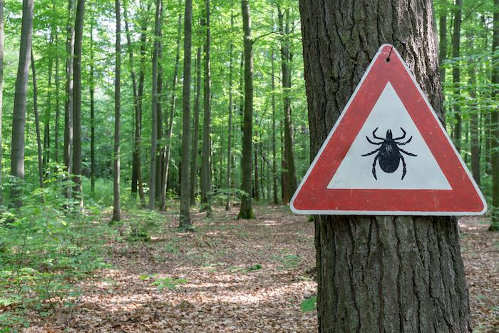 Maladie de Lyme : les douleurs articulaires persistantes expliquées