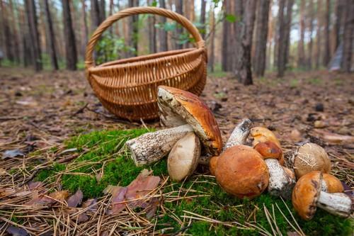 Intoxications aux champignons :  tendance à la hausse en octobre