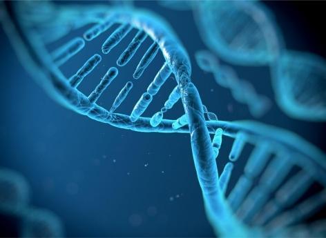 CRISPR : les « ciseaux génétiques » en phase de test