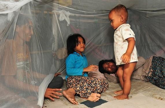 Paludisme : pas de résistance à l'artémisinine en Afrique