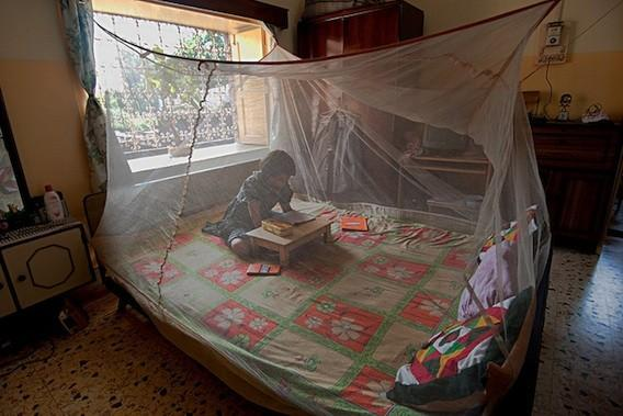 Paludisme : succès d'un vaccin expérimental