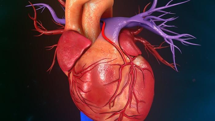 Insuffisance cardiaque : une nouvelle technique de reprogrammation cellulaire pour réparer les coeurs