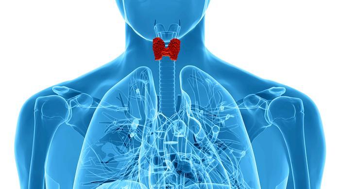 Thyroïde : les variations saisonnières de l'activité dirigent la sexualité