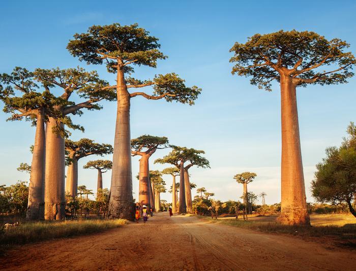 Peste : une épidémie de peste pulmonaire inquiétante à Madagascar