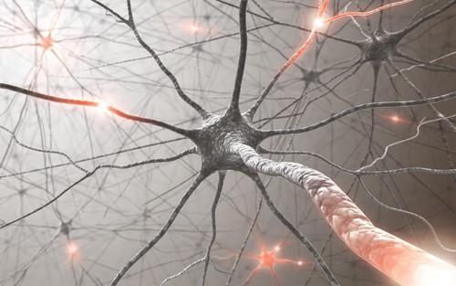 SLA : une accumulation de protéine SOD1 dans les neurones