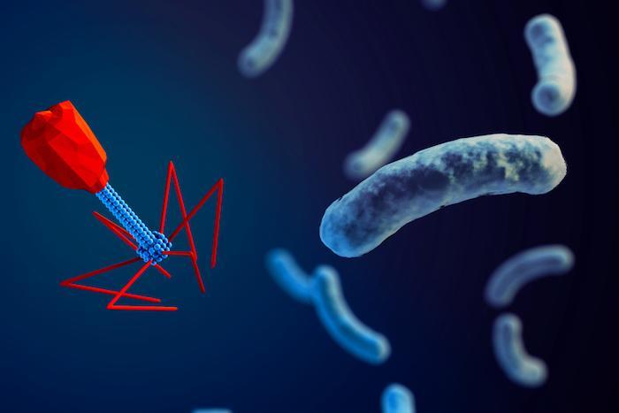 Antibiorésistance : les bactériophages sont une solution naturelle
