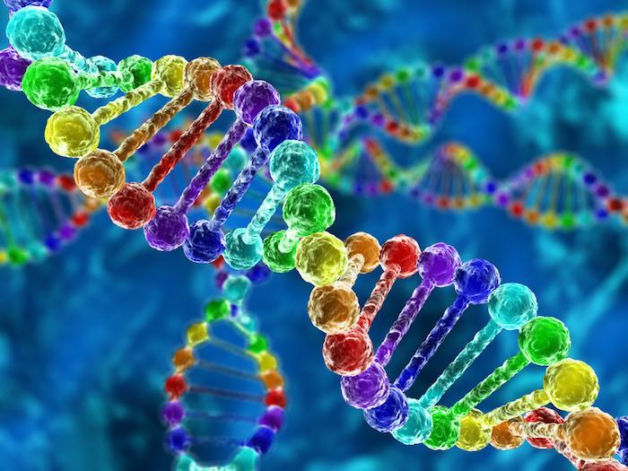 BRCA1 et BRCA2 : augmentation du risque de cancer, mais pas de la mortalité