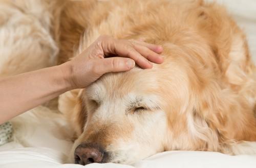 Troubles psychiques : le rôle bénéfique des animaux de compagnie
