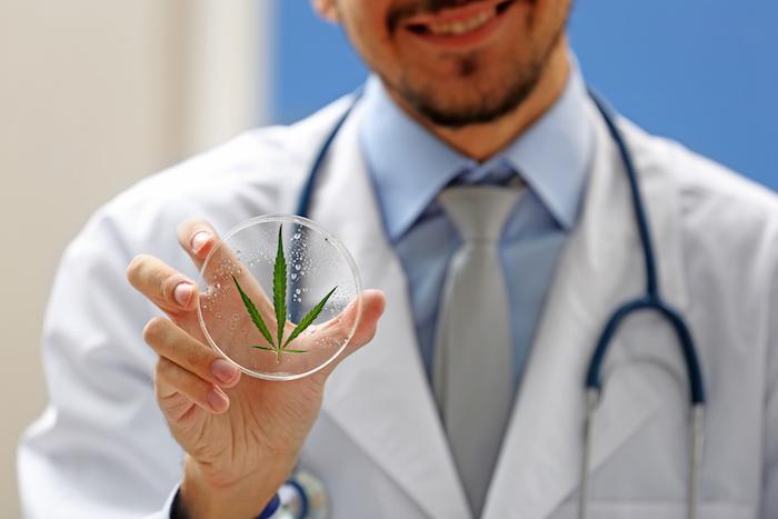 Cannabis : contravention et poursuites éventuelles selon le gouvernement