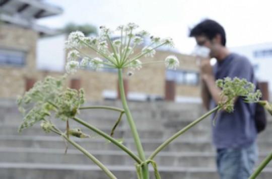 Cancer : les risques de la médecine par les plantes