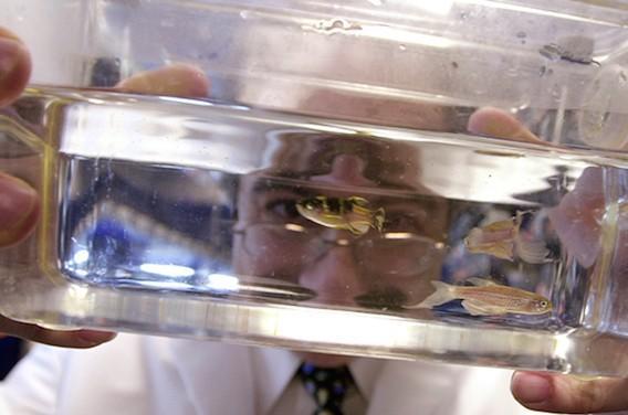 Mélanome : des chercheurs peuvent voir la première cellule cancéreuse